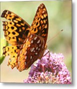 Butter Fly Thrown Looking Right Metal Print