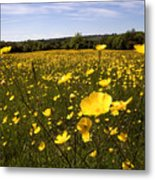 Buttercup Field Metal Print