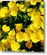 Buttercup Flowers Metal Print