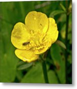 Buttercup Hospitality Metal Print