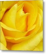 Buttercup Rose Metal Print