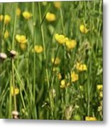 Buttercups And Green Grass At Moore State Park Metal Print