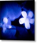 Buttercups In White Blue And Black Metal Print