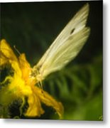 Butterflies And Blossoms Metal Print