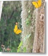 Butterflies and Spanish Moss Metal Print