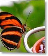 Butterflies Are Blooming Metal Print