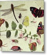Butterflies, Insects And Flowers Metal Print
