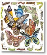 Butterflies Moths Caterpillars Metal Print