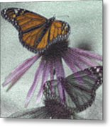 Butterflies Under Glass Metal Print
