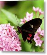Butterfly-1 Metal Print