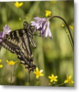 Butterfly 10 Metal Print