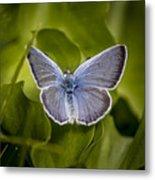 Butterfly 11 Metal Print