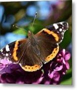 Butterfly 12 Metal Print