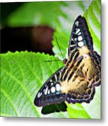 Butterfly 13a Metal Print