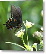 Butterfly 140 Metal Print