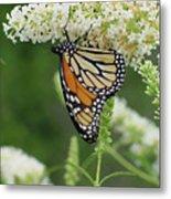 Butterfly 188 Metal Print