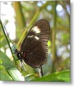 Butterfly-2 Metal Print