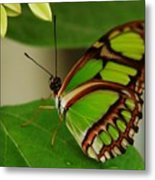 Butterfly 2 Metal Print by Scott Gould