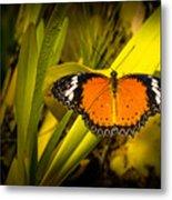 Butterfly 23 Metal Print