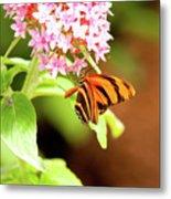 Butterfly-4 Metal Print