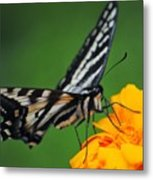 Butterfly Afternoon Metal Print