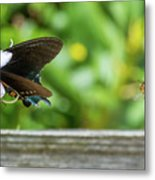 Butterfly And Bee Metal Print