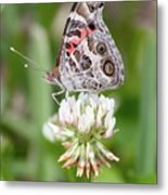 Butterfly And Bugs On Clover Metal Print
