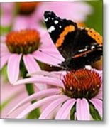 Butterfly And Cone Flowers Metal Print
