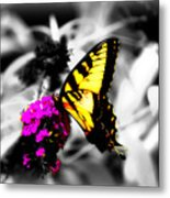 Butterfly And Lilac Metal Print