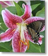 Butterfly And Lilly Metal Print