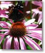 Butterfly And Pink Cone Flower Metal Print
