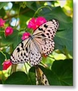 Butterfly And Pink Flower Metal Print
