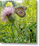 Butterfly And Pink Wildflower Metal Print