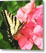 Butterfly And The Geranium Metal Print