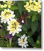 Butterfly And The Spider Metal Print