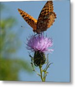 Butterfly And Thistle 1 Metal Print