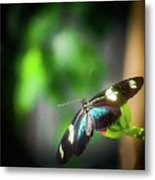 Butterfly At Cleveland Botanical Gardens Metal Print