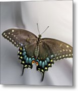 Butterfly At Picnic Metal Print