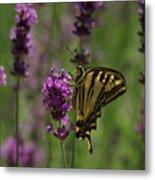 Butterfly Balancing Act Metal Print
