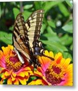 Butterfly Beauty II Metal Print