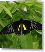 Butterfly Black And Yellow Metal Print