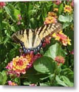 Butterfly Blend Metal Print