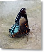 Butterfly Blue On Groovy 2 Metal Print