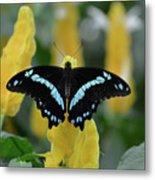 Butterfly Blue Striped Metal Print