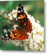 Butterfly Bush Metal Print