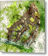 Butterfly Close Up Digital Watercolor On Photograph Metal Print