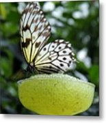 Butterfly Cocktail Time Metal Print