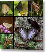Butterfly Collage 1 Metal Print