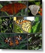 Butterfly Collage 2  Metal Print by April Wietrecki Green