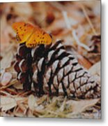 Butterfly Cone Metal Print